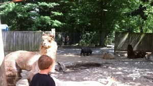 Catoctin Zoo: How To Have An Awesome Day Trip