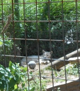 Catoctin Wildlife Preserve and Zoo