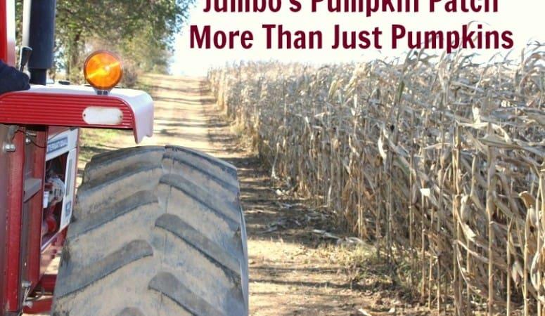 Jumbo's Pumpkin Patch – More Than Just Pumpkins