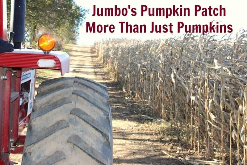 Jumbo's Pumpkin Patch - More Than Just Pumpkins