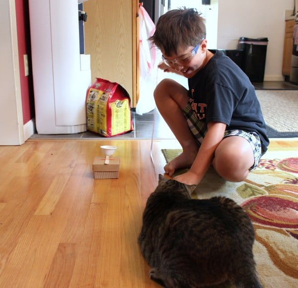 Box Catapult - The cat getting in on the action