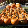The Weekend in Frederick, MD 10/17/14 to 10/19/14