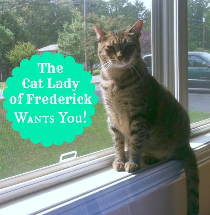 The-Cat-Lady-of-Frederick-Wants-You!