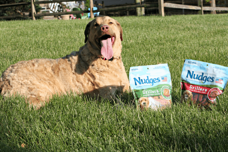 Our dog loves her Nudges dog treats