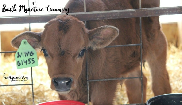 South Mountain Creamery – Cows, Ice Cream & More!