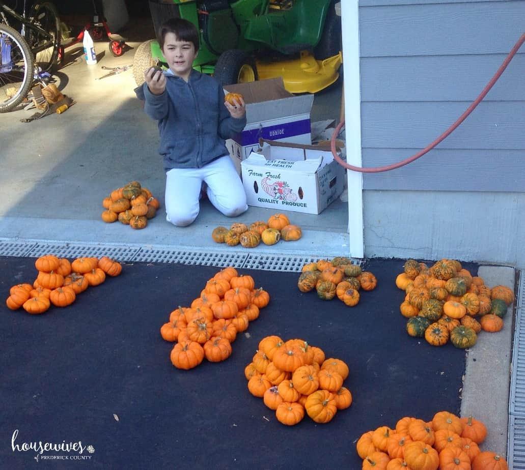 Gather your pumpkins