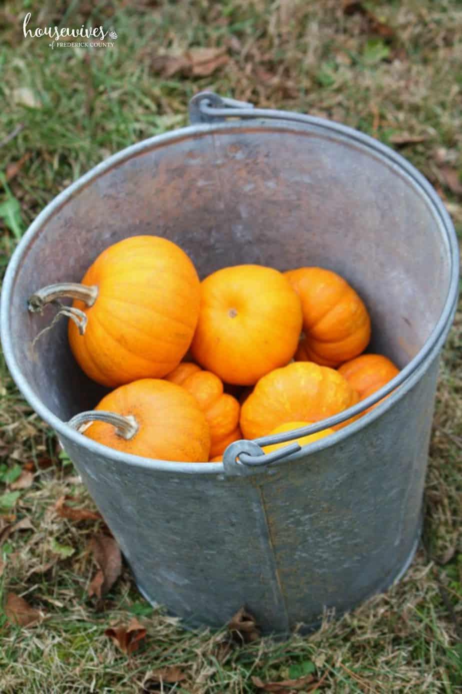 What is Pumpkin Chunkin?