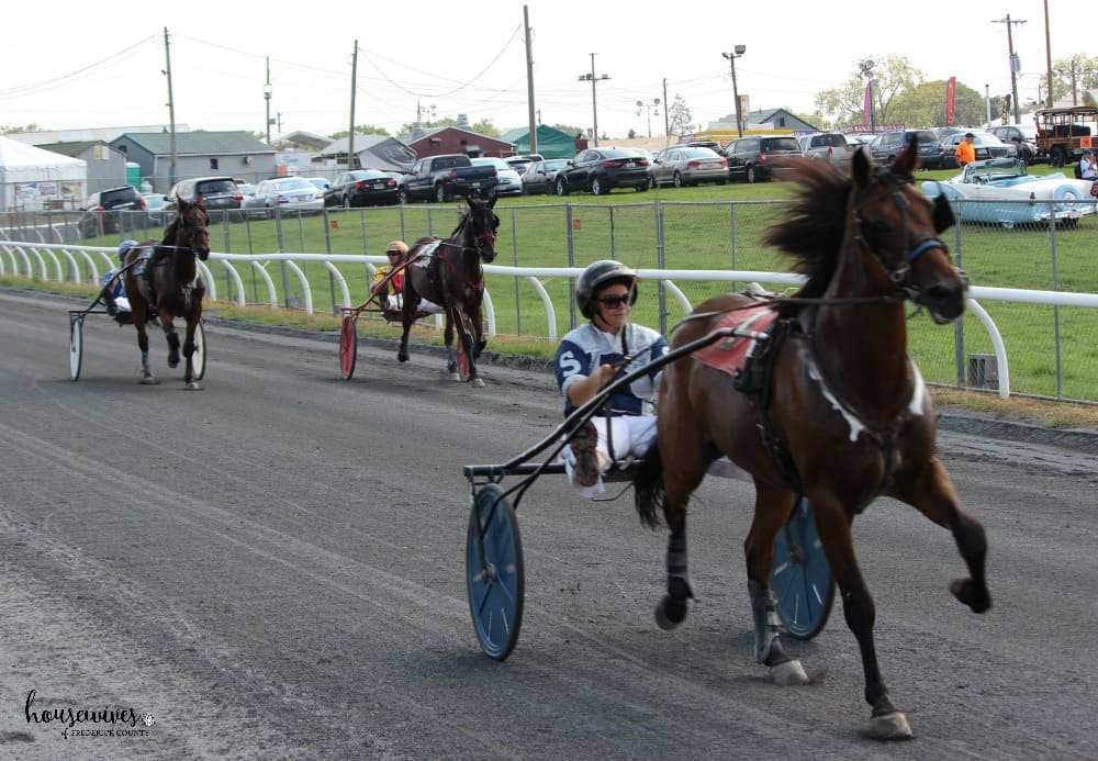 Horse Pull Races