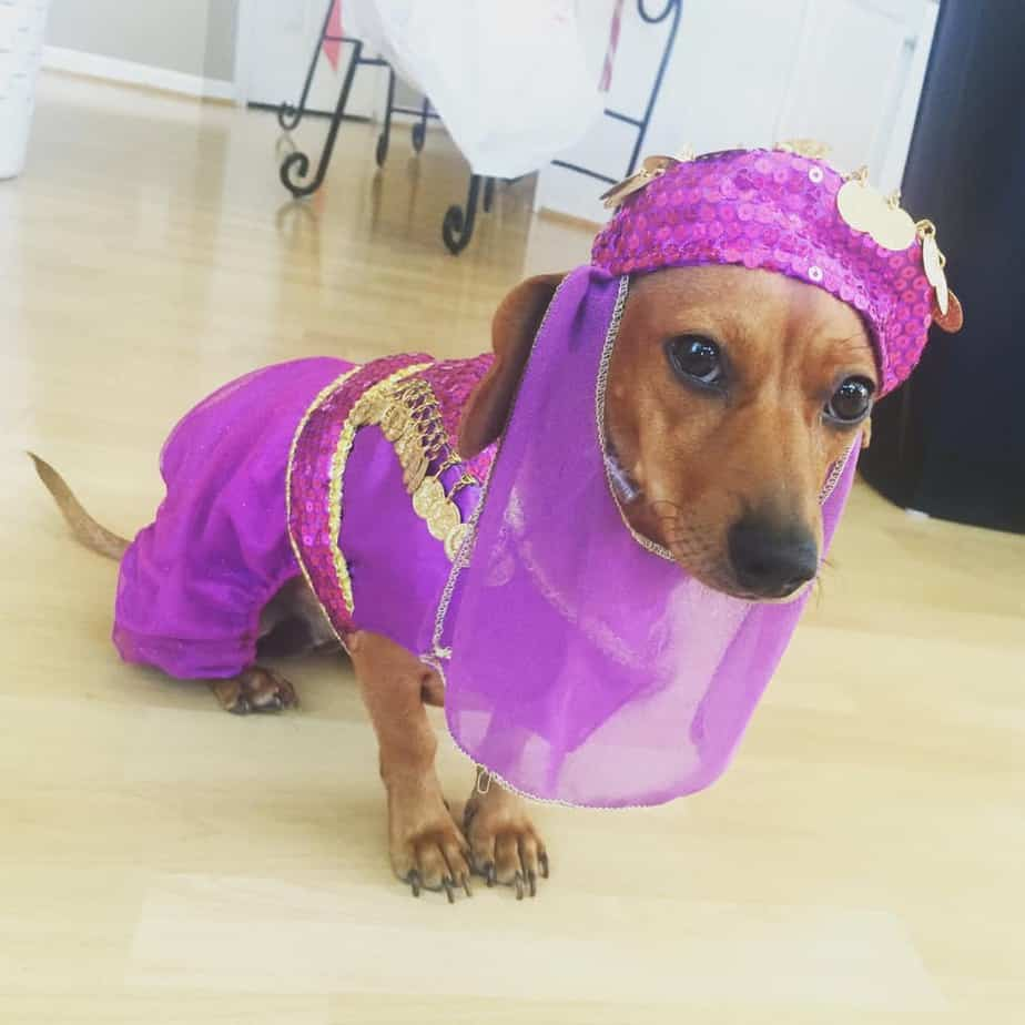 National Dress Up Your Pet Day: 4 Important Do's