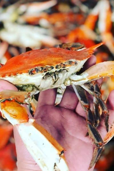 Best Steamed Crabs in Frederick, Md