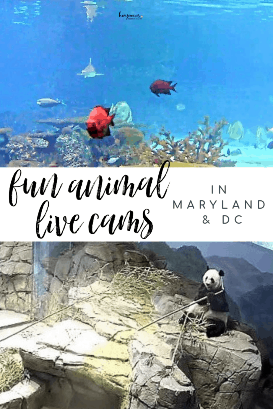 Fun Animal Live Cams in Maryland & DC: Feel Like You're There