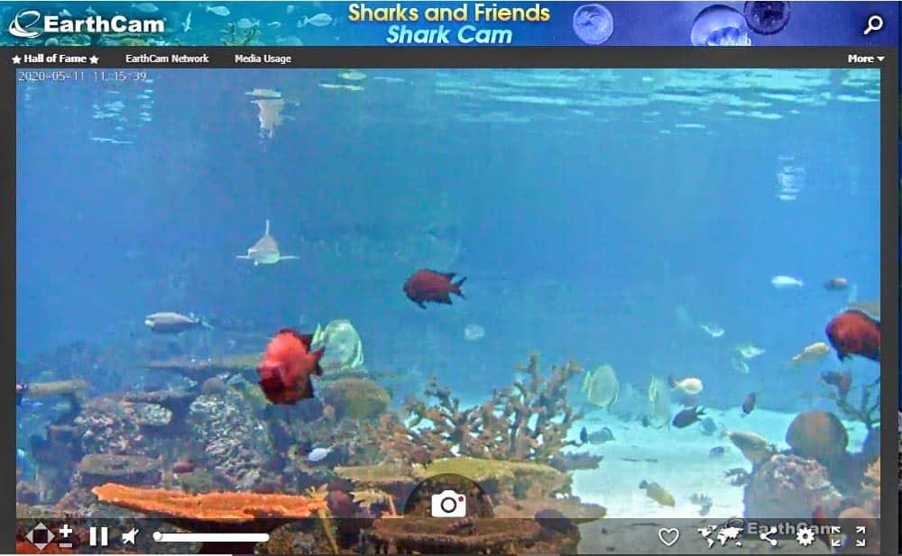 Baltimore Aquarium Live Shark Cam