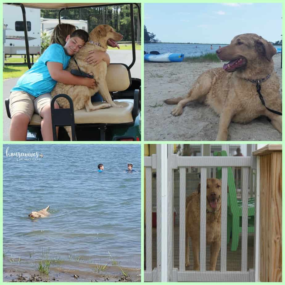 Pet friendly resort - Masseys Landing