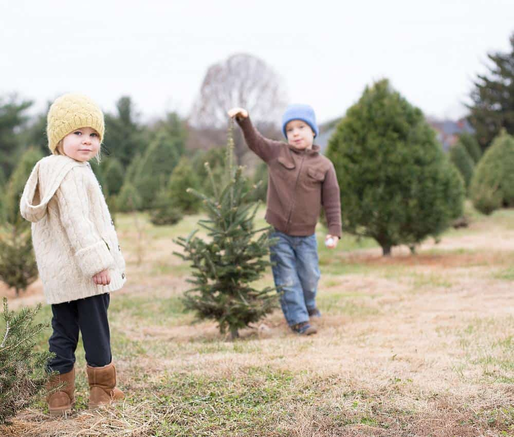 Christmas Tree Farms in Frederick Md & Nearby