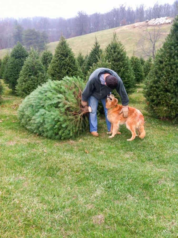 Christmas Tree Farms in Frederick Md & Nearby - Housewives ...