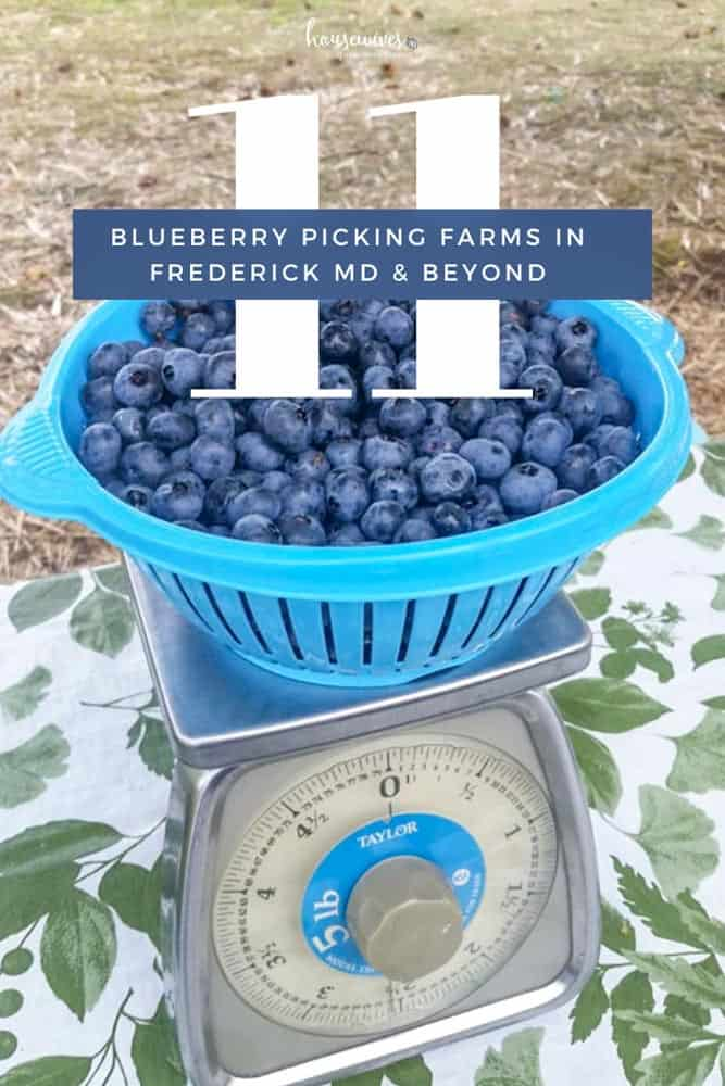 Blueberry Picking in Frederick Md & Beyond