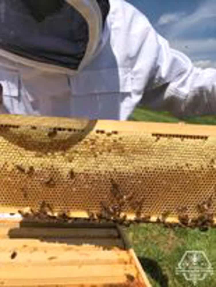 Coppermine Combs Apiary